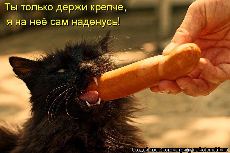 Котоматрица: Ты только держи крепче,  я на неё сам наденусь!