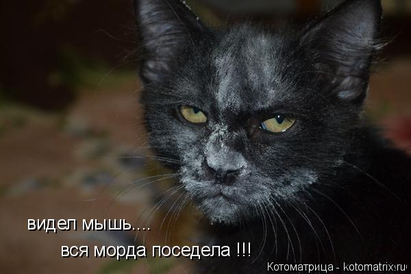 Котоматрица: видел мышь.... вся морда поседела !!!