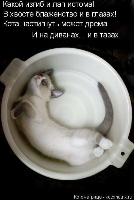Котоматрица: Какой изгиб и лап истома! В хвосте блаженство и в глазах! Кота настигнуть может дрема И на диванах... и в тазах!