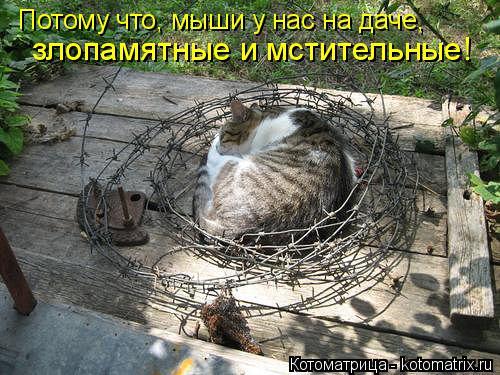 Котоматрица: Потому что, мыши у нас на даче,   злопамятные и мстительные!