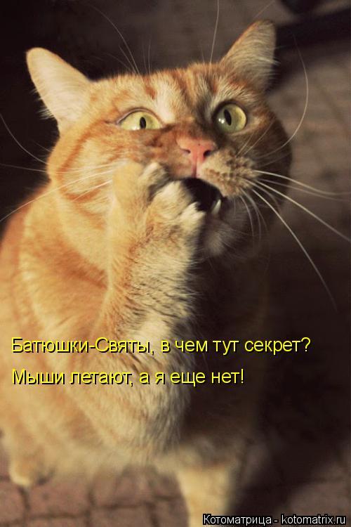 Котоматрица: Батюшки-Святы, в чем тут секрет?  Мыши летают, а я еще нет!