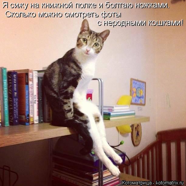 Котоматрица: Я сижу на книжной полке и болтаю ножками. Сколько можно смотреть фоты  с неродными кошками!