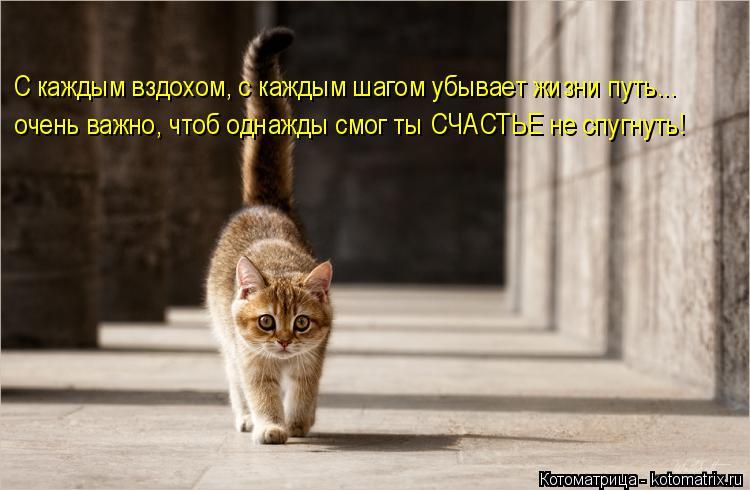 Котоматрица: С каждым вздохом, с каждым шагом убывает жизни путь... очень важно, чтоб однажды смог ты СЧАСТЬЕ не спугнуть!