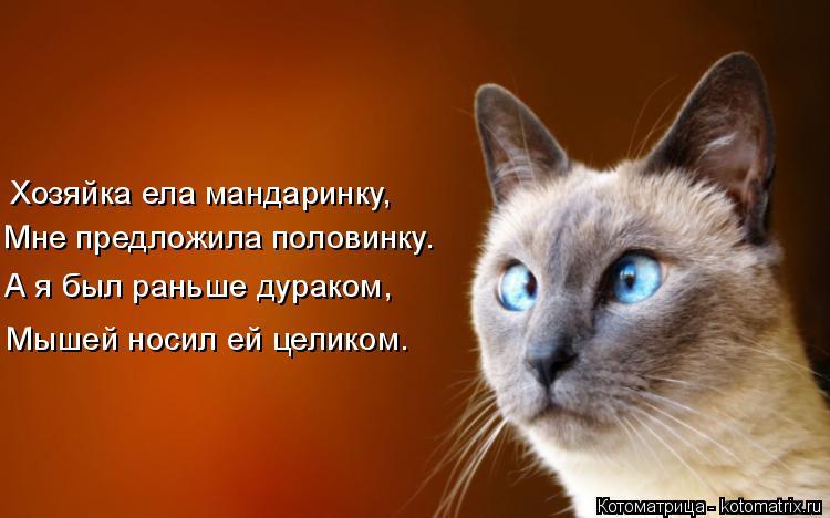 Котоматрица: Хозяйка ела мандаринку, Мне предложила половинку. А я был раньше дураком, Мышей носил ей целиком.