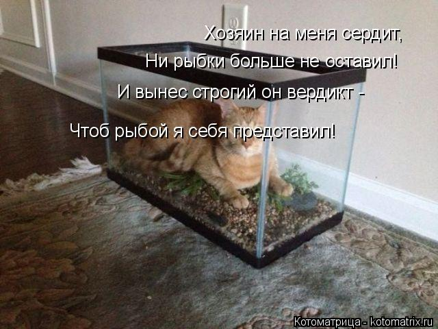 Котоматрица: Хозяин на меня сердит, Ни рыбки больше не оставил! И вынес строгий он вердикт - Чтоб рыбой я себя представил!