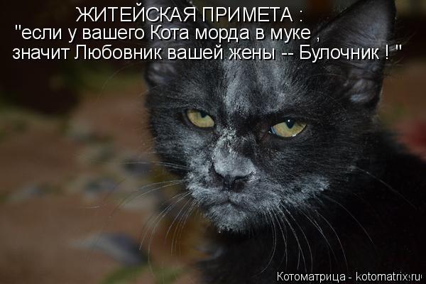 """Котоматрица: ЖИТЕЙСКАЯ ПРИМЕТА : """"если у вашего Кота морда в муке , значит Любовник вашей жены -- Булочник ! """""""