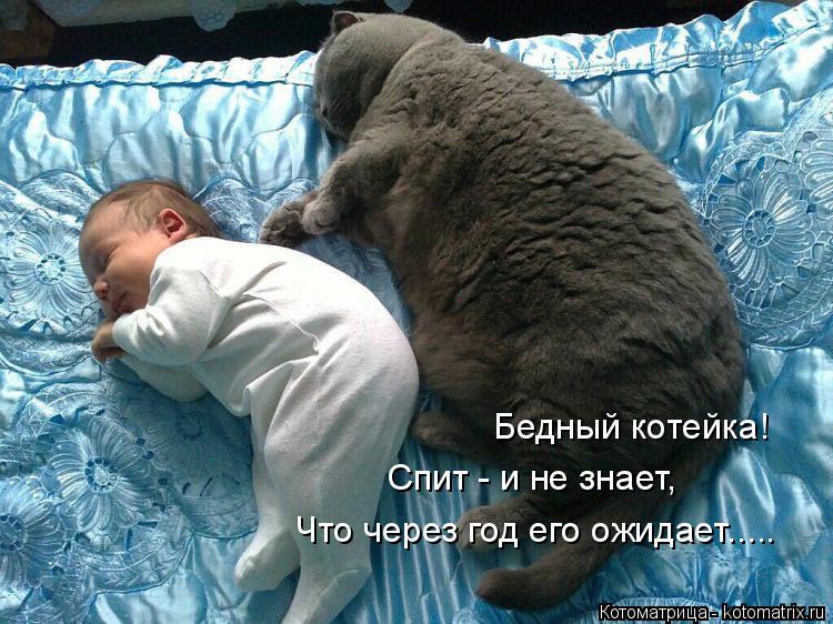 Котоматрица: Бедный котейка! Спит - и не знает, Что через год его ожидает.....