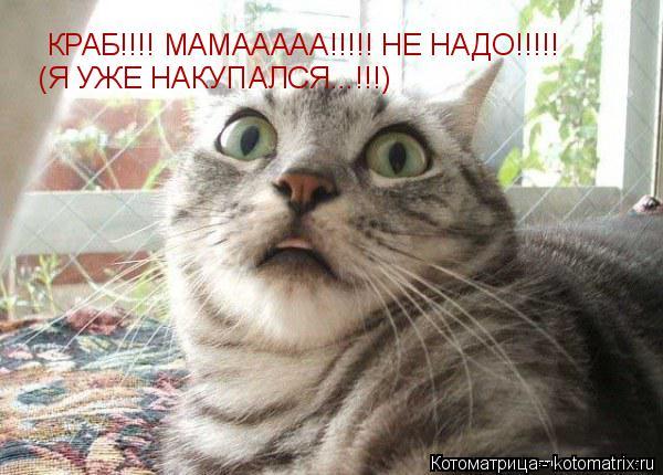 Котоматрица: КРАБ!!!! МАМААААА!!!!! НЕ НАДО!!!!!  (Я УЖЕ НАКУПАЛСЯ...!!!)