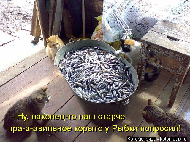 Котоматрица: - Ну, наконец-то наш старче  пра-а-авильное корыто у Рыбки попросил!