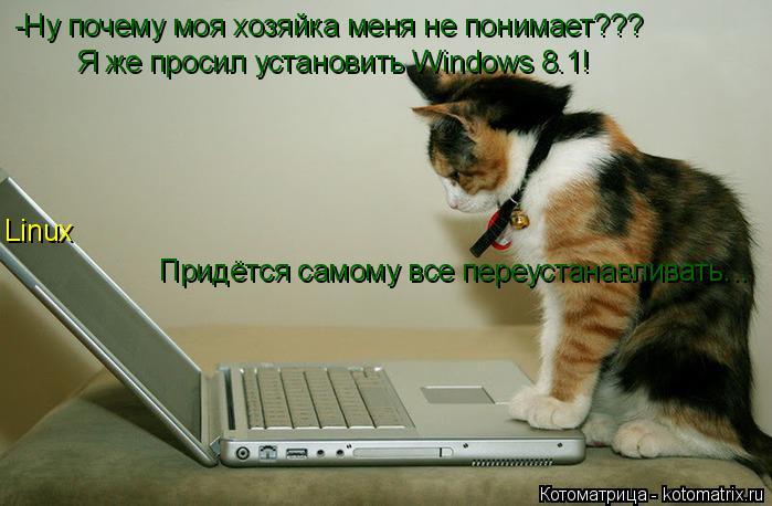 Котоматрица: -Ну почему моя хозяйка меня не понимает??? Я же просил установить Windows 8.1! Linux Придётся самому все переустанавливать...