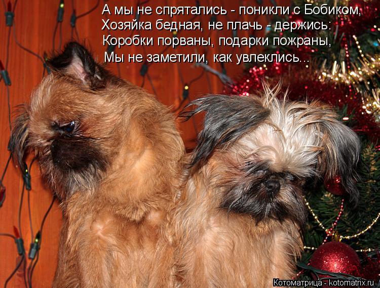 Котоматрица: А мы не спрятались - поникли с Бобиком, Хозяйка бедная, не плачь - держись: Коробки порваны, подарки пожраны, Мы не заметили, как увлеклись...