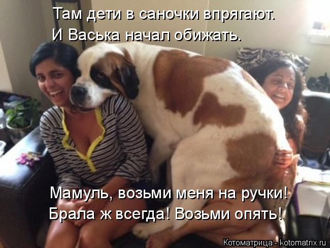 Котоматрица: Там дети в саночки впрягают. И Васька начал обижать. Мамуль, возьми меня на ручки! Брала ж всегда! Возьми опять!
