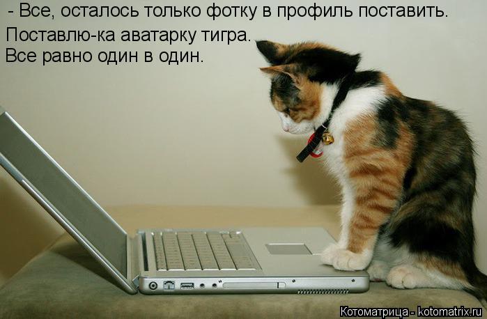 Котоматрица: - Все, осталось только фотку в профиль поставить. Поставлю-ка аватарку тигра.  Все равно один в один.