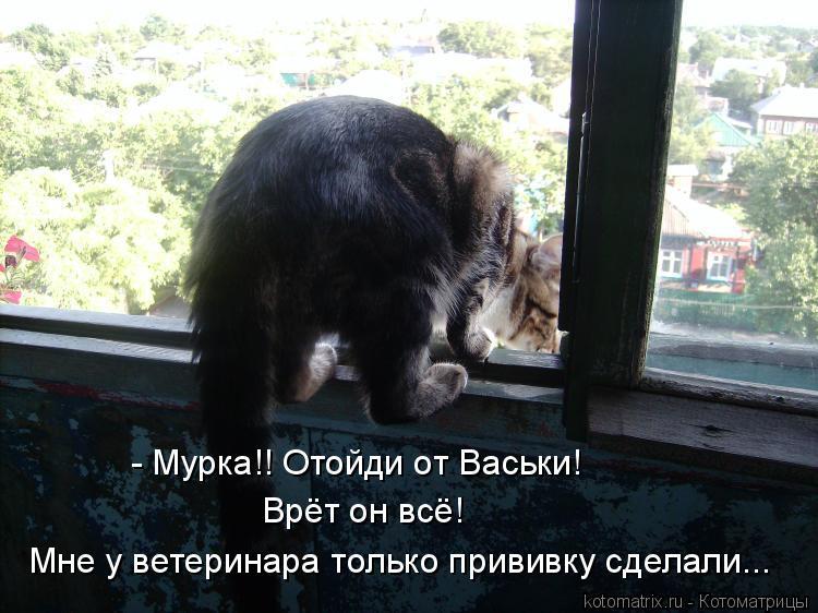 Котоматрица: Врёт он всё! - Мурка!! Отойди от Васьки! Мне у ветеринара только прививку сделали...