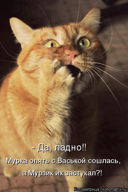 Котоматрица: - Да, ладно!! Мурка опять с Васькой сошлась, а Мурзик их застукал?!