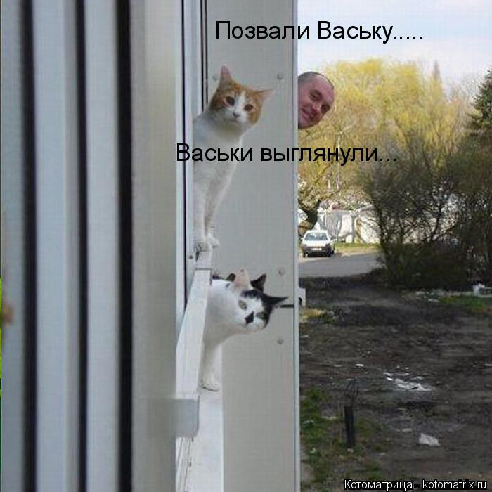 Котоматрица: Позвали Ваську..... Васьки выглянули...