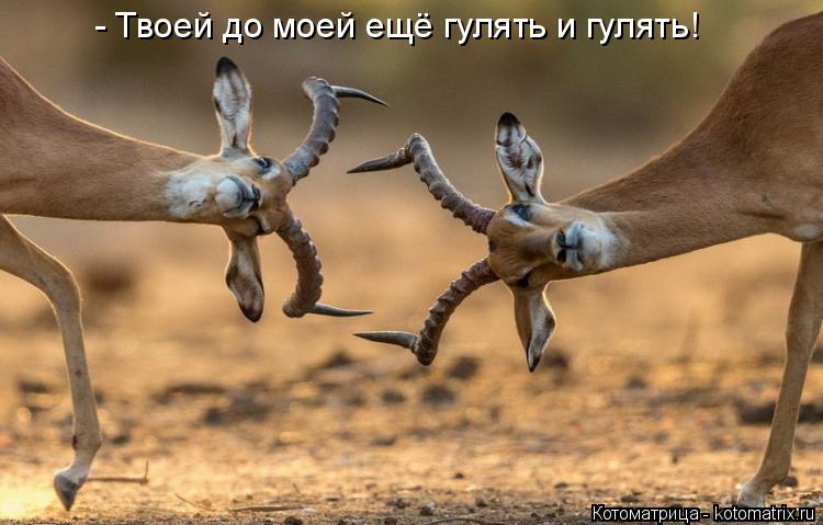 Котоматрица: - Твоей до моей ещё гулять и гулять!