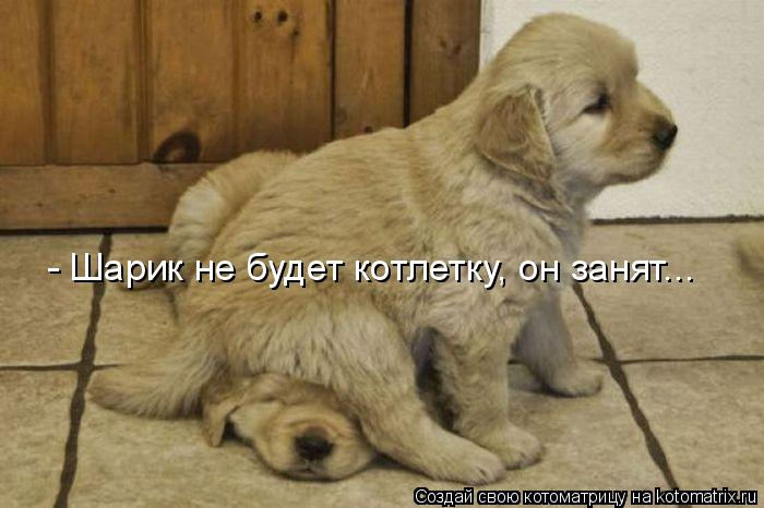 Котоматрица: - Шарик не будет котлетку, он занят...