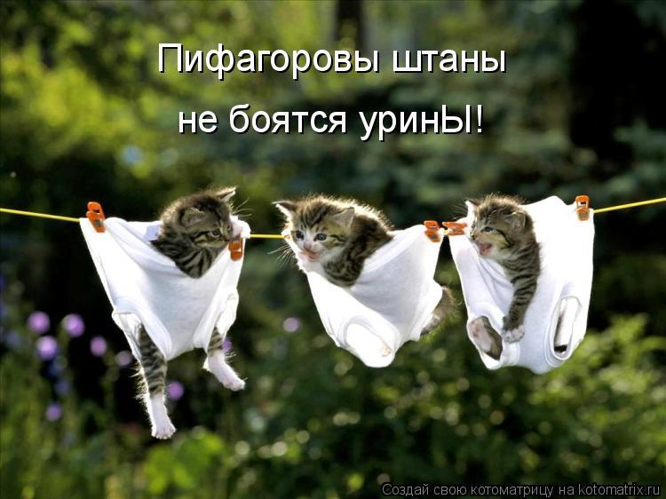 Котоматрица: Пифагоровы штаны не боятся уринЫ!