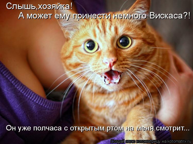 Котоматрица: Слышь,хозяйка!  А может ему принести немного Вискаса?! Он уже полчаса с открытым ртом на меня смотрит...