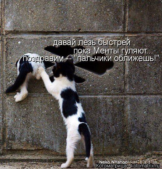 """Котоматрица: давай лезь быстрей , пока Менты гуляют... поздравим -- """"пальчики оближешь!"""""""