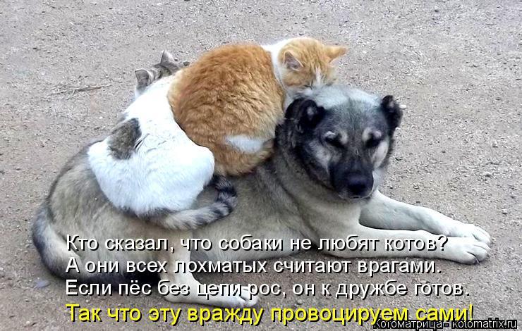 Котоматрица: Кто сказал, что собаки не любят котов? А они всех лохматых считают врагами. Если пёс без цепи рос, он к дружбе готов. Так что эту вражду провоц
