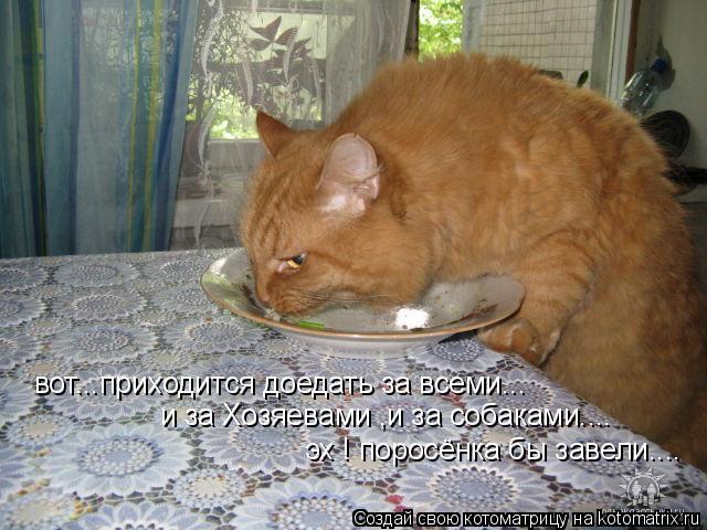Котоматрица: вот...приходится доедать за всеми... и за Хозяевами ,и за собаками.... эх ! поросёнка бы завели....