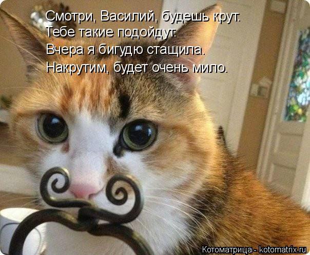 Котоматрица: Смотри, Василий, будешь крут. Тебе такие подойдут. Вчера я бигудю стащила. Накрутим, будет очень мило.