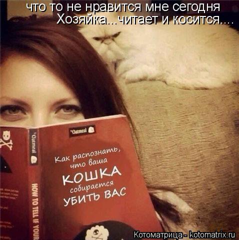 Котоматрица: что то не нравится мне сегодня  Хозяйка...читает и косится....