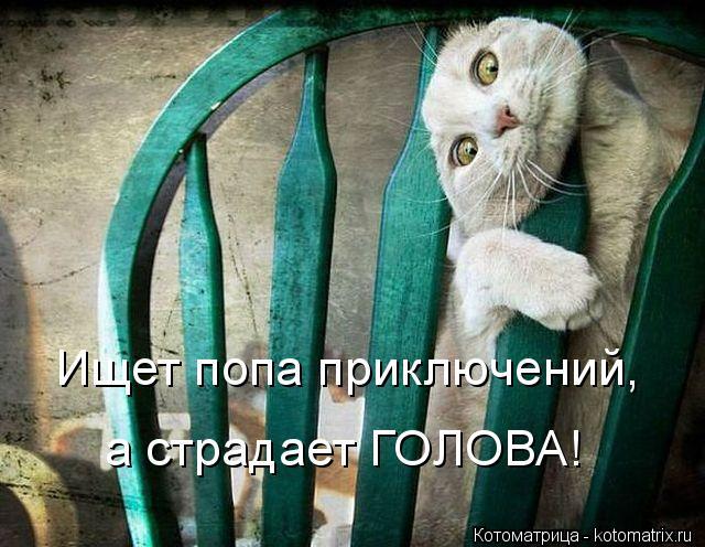 Котоматрица: Ищет попа приключений, а страдает ГОЛОВА!