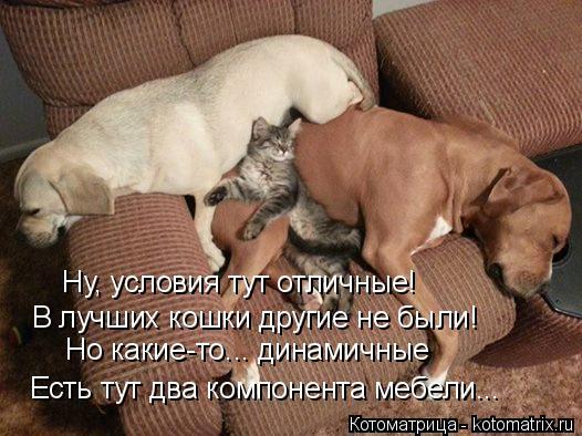 Котоматрица: Ну, условия тут отличные! В лучших кошки другие не были! Но какие-то... динамичные Есть тут два компонента мебели...
