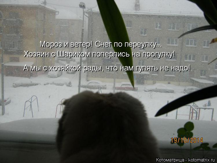 Котоматрица: Мороз и ветер! Снег по переулку... Хозяин с Шариком поперлись на прогулку! А мы с хозяйкой рады, что нам гулять не надо!