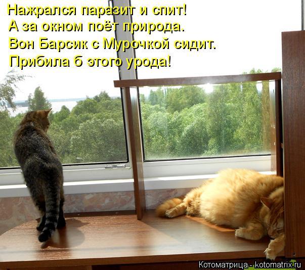 Котоматрица: Нажрался паразит и спит! А за окном поёт природа. Вон Барсик с Мурочкой сидит. Прибила б этого урода!