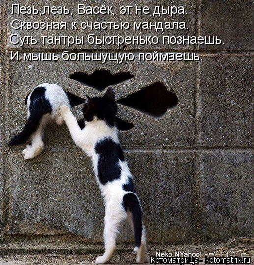 Котоматрица: Лезь,лезь, Васёк, эт не дыра. Сквозная к счастью мандала. Суть тантры быстренько познаешь. И мышь большущую поймаешь.