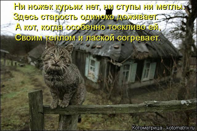 Котоматрица: Ни ножек курьих нет, ни ступы ни метлы. Здесь старость одиноко доживает. А кот, когда особенно тоскливо ей, Своим теплом и лаской согревает.