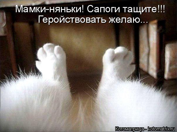 http://kotomatrix.ru/images/lolz/2014/11/11/kotomatritsa_0_.jpg
