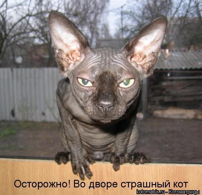 Котоматрица: Осторожно! Во дворе страшный кот