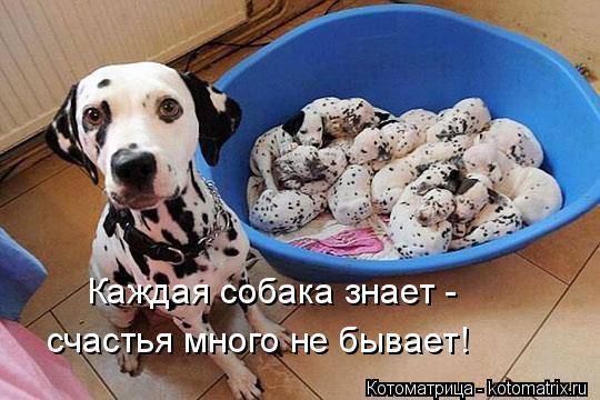 Котоматрица: Каждая собака знает -  счастья много не бывает!