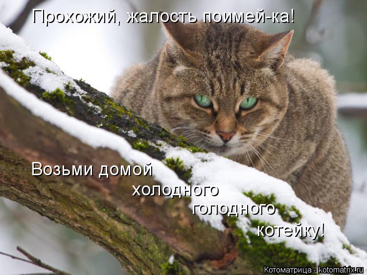 Котоматрица: Прохожий, жалость поимей-ка! Возьми домой  холодного голодного котейку!