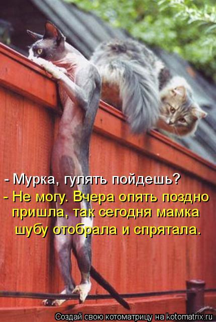 http://kotomatrix.ru/images/lolz/2014/11/12/kotomatritsa_-k.jpg