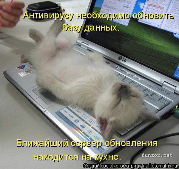 Котоматрица: Антивирусу необходимо обновить  базу данных. Ближайший сервер обновления находится на кухне.