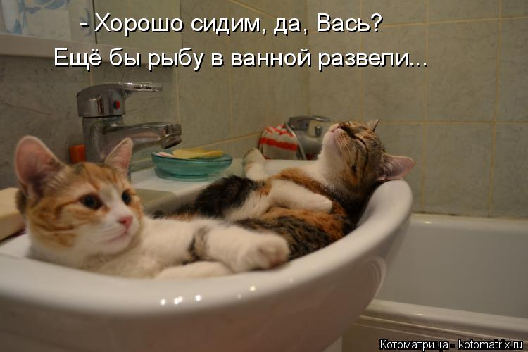 Котоматрица: - Хорошо сидим, да, Вась? Ещё бы рыбу в ванной развели...