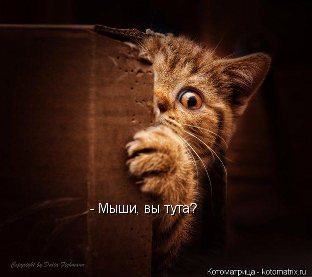 Котоматрица: - Мыши, вы тута?