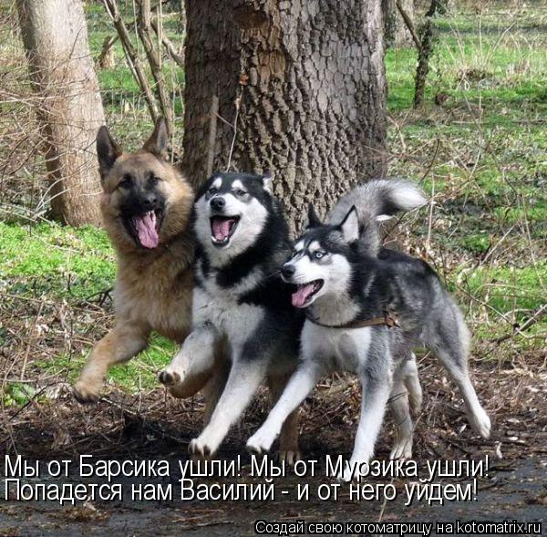 Котоматрица: Мы от Барсика ушли! Мы от Мурзика ушли! Попадется нам Василий - и от него уйдем!