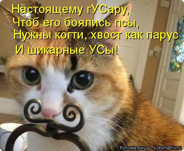 Котоматрица: Настоящему гУСару, Чтоб его боялись псы, Нужны когти, хвост как парус И шикарные УСы!