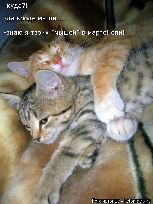 "Котоматрица: -куда?! -да вроде мыши... -знаю я твоих ""мышей"" в марте! спи!"