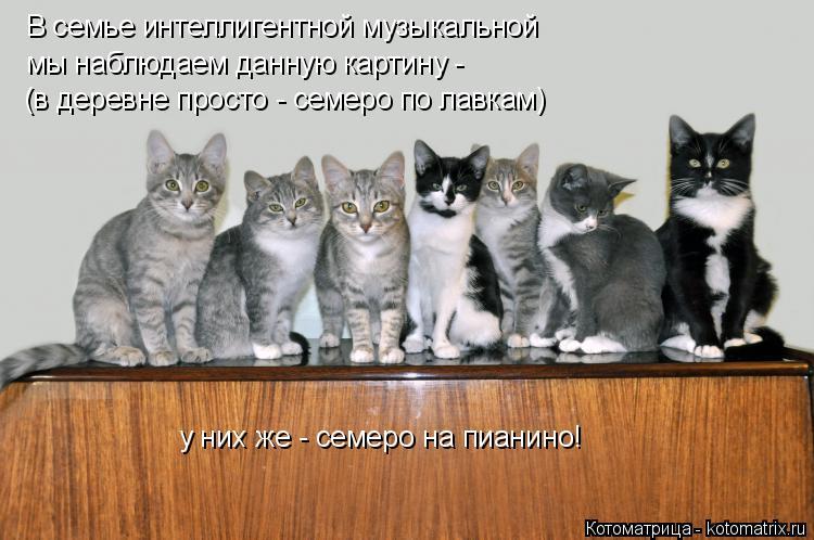 Котоматрица: В семье интеллигентной музыкальной мы наблюдаем данную картину - (в деревне просто - семеро по лавкам) у них же - семеро на пианино!