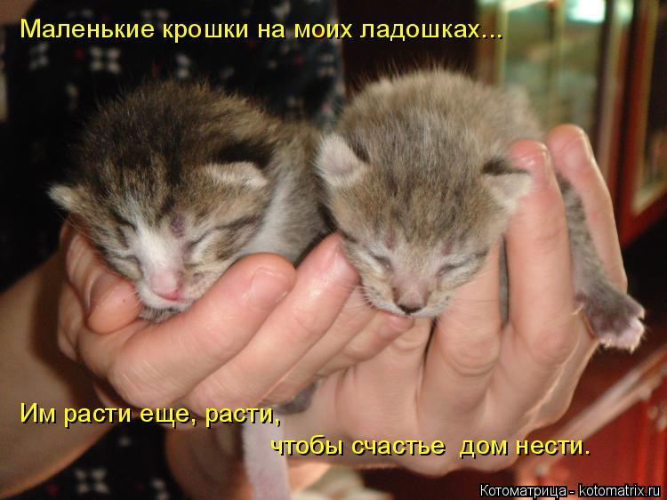 Котоматрица: Маленькие крошки на моих ладошках... Им расти еще, расти, чтобы счастье  дом нести.