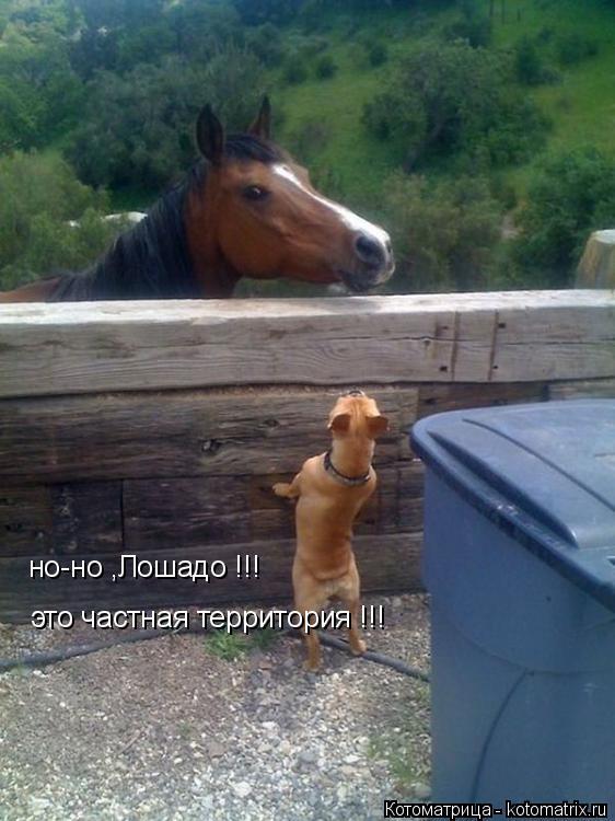 Котоматрица: но-но ,Лошадо !!! это частная территория !!!
