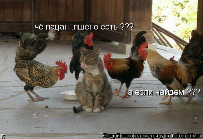 Котоматрица: чё пацан ,пшено есть ??? а если найдем ???